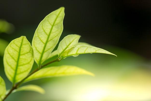 Natura widok zielonego liścia abstrakcjonistyczny tło w ogródzie