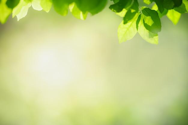 Natura widok zielony liść na niewyraźne tło zieleni