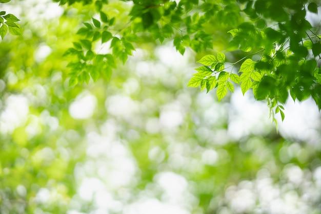 Natura widok zielony liść na niewyraźne tło zieleni.