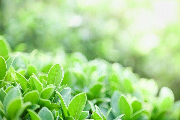 Natura widok zielony liść na tle niewyraźne zieleni pod światło słoneczne