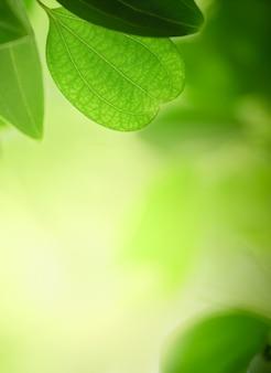 Natura widoku zieleni liść na zamazanym greenery tle pod światłem słonecznym