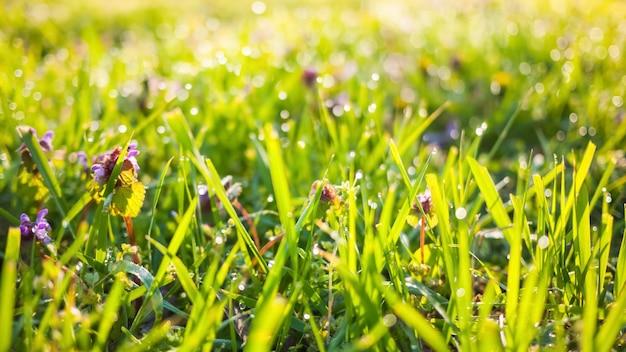 Natura z zieloną trawą i kwiatami