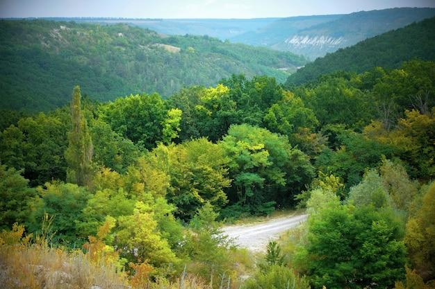 Natura z zielonym lasem i niebieskim niebem