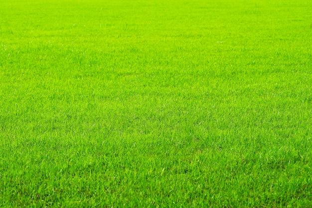 Natura zielona trawa w tle pola. gospodarstwo rolne lub ogród i kopiowanie miejsca, wykorzystując jako tło naturalny krajobraz rolnictwa ryżu