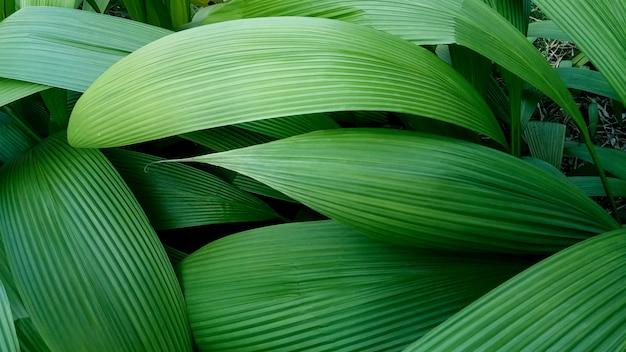 Natura zielone liście na tła