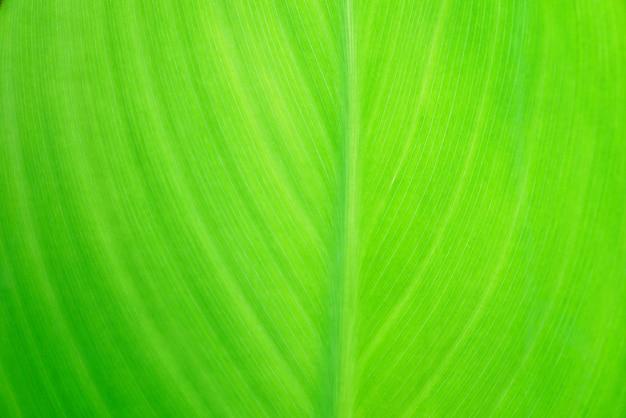 Natura zielony liść tekstura tło
