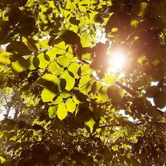 Natura żywy drzewny światła słonecznego pojęcie