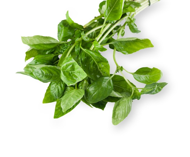 Naturalna ekologiczna zdrowa żywność. liść ziela bazylii