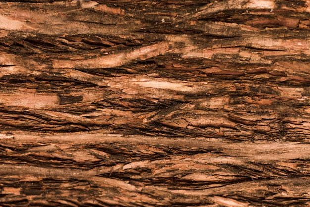 Naturalna horyzontalna drzewna lasowa tekstura