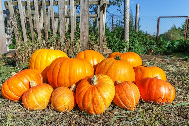 Naturalna jesień widok dyni na tle gospodarstwa ekologicznego