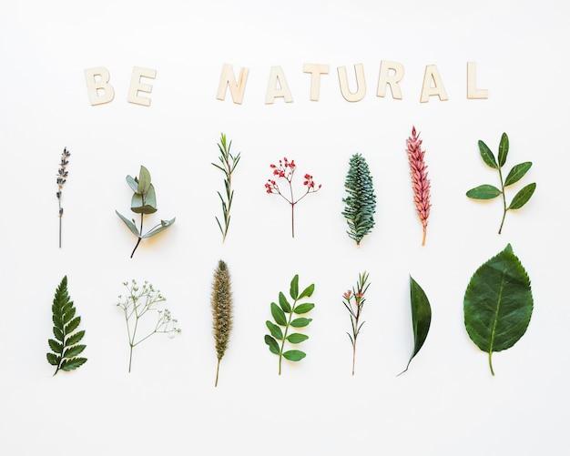 Naturalna kompozycja z liśćmi