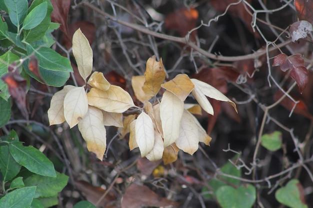 Naturalna roślina w leśnym polu ziemiste kolory i światło słoneczne