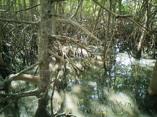 Naturalna roślinność namorzynowa z korzeniami.
