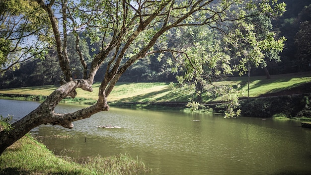 Naturalna sceneria jeziora