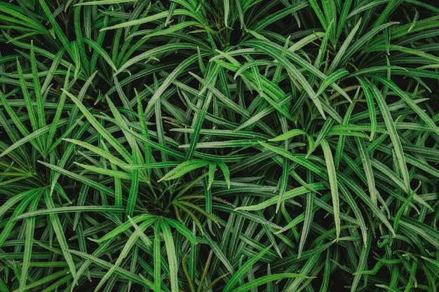 Naturalna ściana zielonych liści
