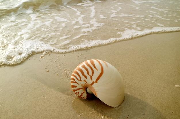 Naturalna skorupa nautilus izolowana na mokrej piaszczystej plaży z sea swash