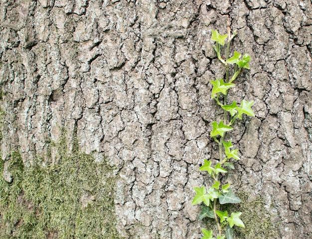 Naturalna stara kora drzewa z młodą zieloną rośliną. wiosna i nowa koncepcja życia