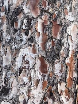 Naturalna szorstka kora drzew tropikalnych. zdjęcie