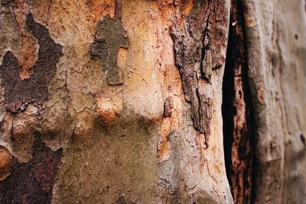 Naturalna tekstura drzewa z drewna jako drewniane tło środowiska i zbliżenie natury