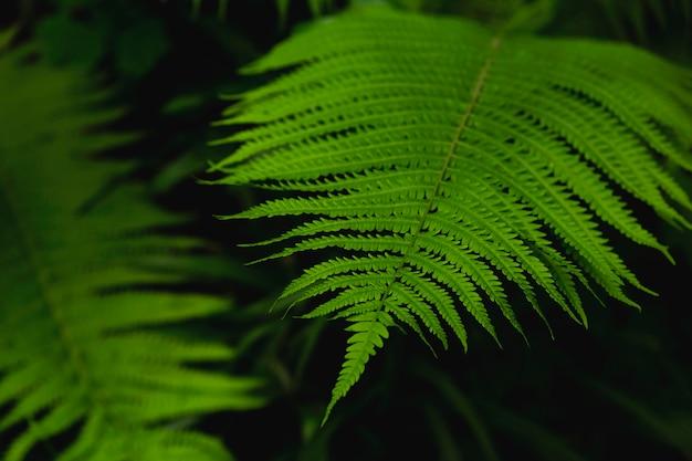 Naturalna tekstura mokra paproć opuszcza na ciemnym tle.