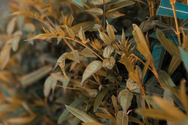 Naturalna tekstura roślinności