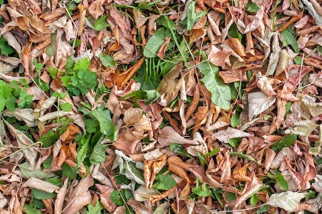 Naturalna tekstura zielonych liści zmieszanych z suchymi brązami na jesiennej ziemi. jesienny dywan roślinności
