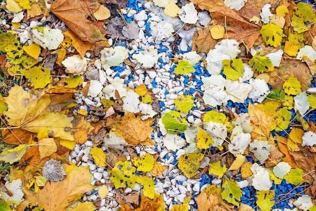 Naturalna tekstura żółtych jesiennych opadłych liści osiki i klonu oraz drobnego kamienia.