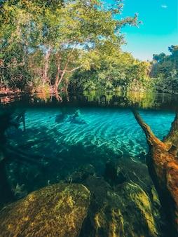 Naturalna woda na środku lasu