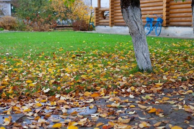 Naturalne jesienne tło jesienne tło żółtych opadłych liści na zielonym trawniku w pobliżu domu z bali w ...