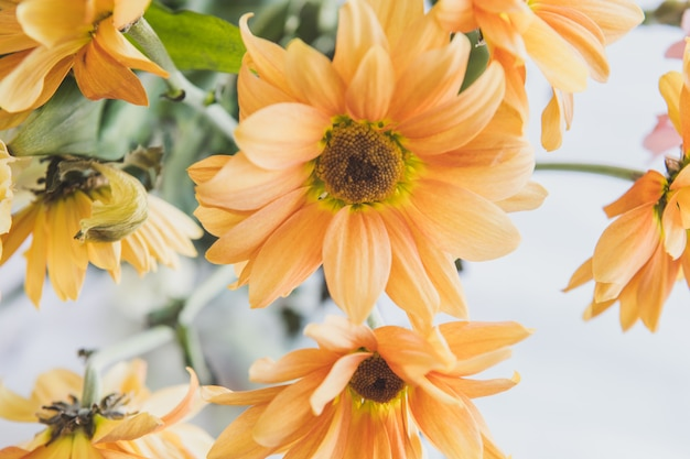 Naturalne kwiaty o uderzających kolorach