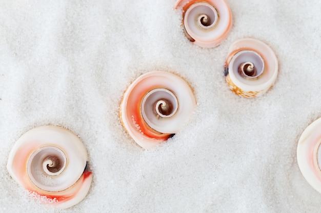 Naturalne letnie tło z drobnym białym piaskiem, na którym rozrzucone są okrągłe muszle.