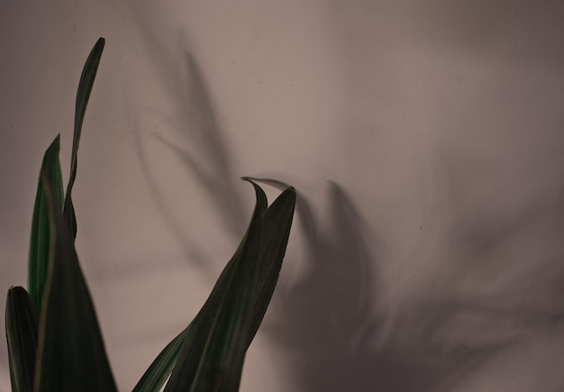 Naturalne liście rośliny doniczkowej z nakładką cienia na szarym tle ściany