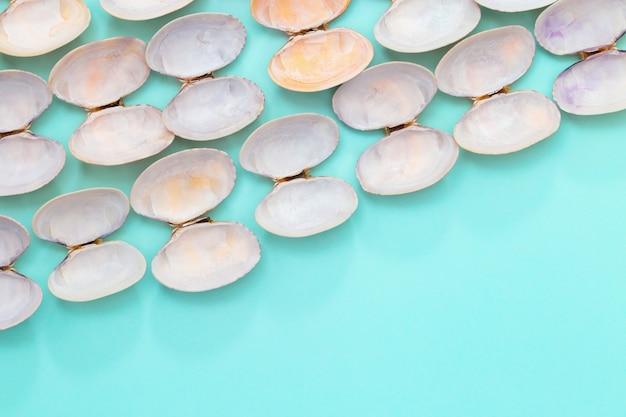 Naturalne okrągłe muszle na niebieskim papierze. lato wzór tła z muszli w pastelowych kolorach