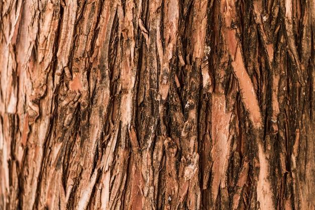 Naturalne pionowe tekstury drzewa lasu