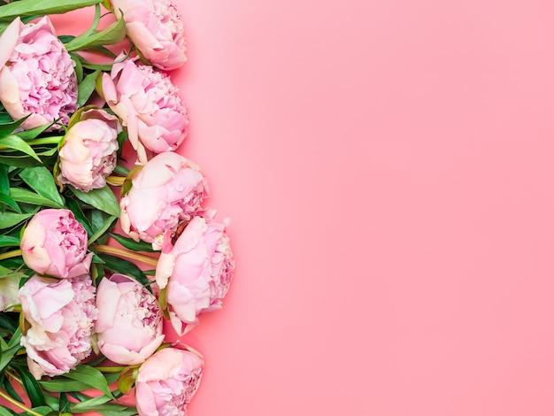 Naturalne różowe piwonie ogrodowe na różowym tle