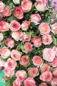 Naturalne różowe róże tło