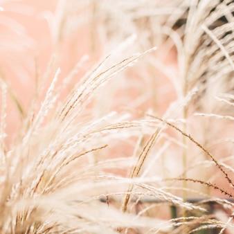 Naturalne Streszczenie Tło. Suche Trzciny Wygięte Przez Wiatr Premium Zdjęcia