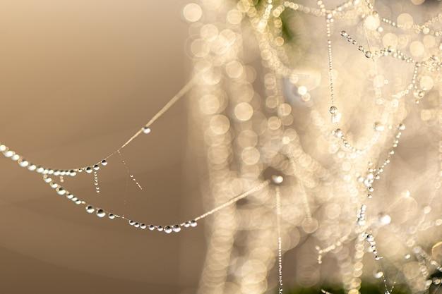 Naturalne streszczenie tło z kroplami rosy krystalicznej na pajęczynie w słońcu.