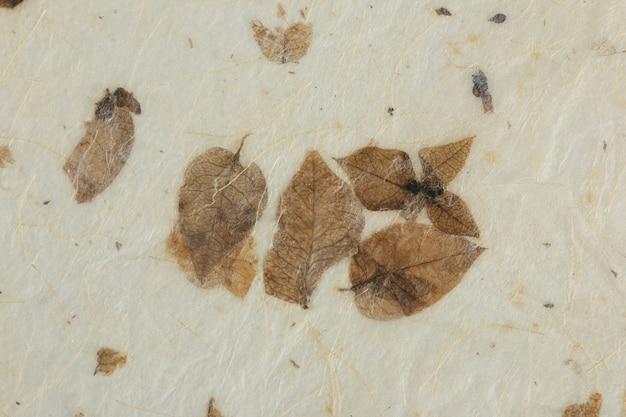 Naturalne suche liście tekstury papieru. papier czerpany.
