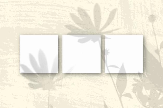 Naturalne światło rzuca cienie z kwiatów topinamburu na 3 kwadratowe arkusze