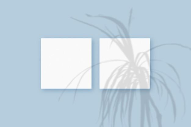 Naturalne światło rzuca cienie z rośliny na 2 kwadratowe arkusze białego papieru leżące na niebieskim tle z teksturą