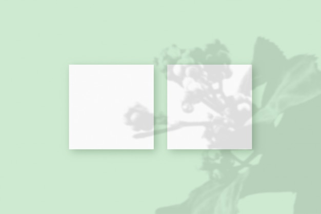 Naturalne światło rzuca cienie z rośliny na 2 kwadratowe arkusze białego papieru leżące na zielonym tle z teksturą. makieta.