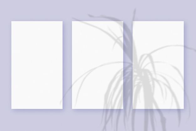 Naturalne światło rzuca cienie z rośliny na 3 pionowe arkusze białego, teksturowanego papieru, leżące na fioletowym teksturowanym tle
