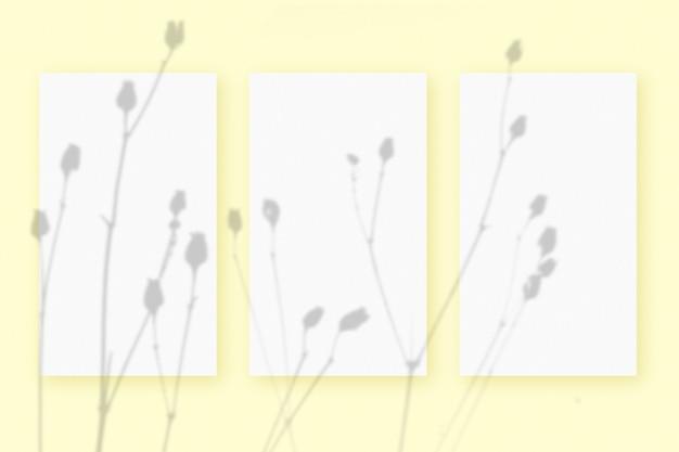 Naturalne światło rzuca cienie z rośliny na 3 pionowe arkusze białego, teksturowanego papieru, leżące na żółtym tle z teksturą. makieta