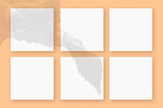Naturalne światło rzuca cienie z rośliny na 6 kwadratowych arkuszach białego papieru leżących na pomarańczowym tle z teksturą. makieta.