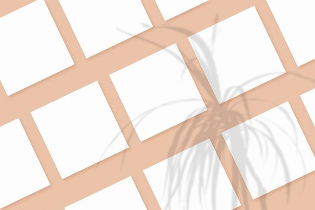 Naturalne światło rzuca cienie z rośliny na kilka kwadratowych arkuszy białego papieru leżących na beżowym teksturowanym tle