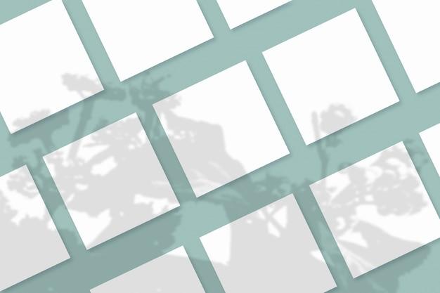 Naturalne światło rzuca cienie z rośliny na kilka kwadratowych arkuszy białego papieru leżących na niebiesko-zielonym teksturowanym tle