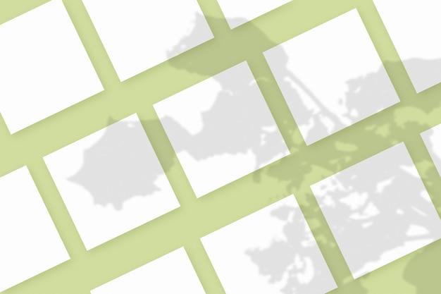 Naturalne światło rzuca cienie z rośliny na kilka kwadratowych arkuszy białego papieru leżących na zielonym tle z teksturą