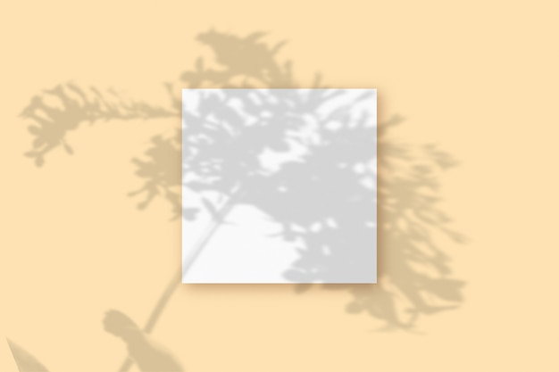 Naturalne światło rzuca cienie z rośliny na kwadratową kartkę białego papieru leżącą na beżowym tle z teksturą. makieta