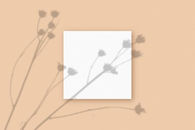 Naturalne światło rzuca cienie z rośliny na kwadratowy arkusz białego teksturowanego papieru a4 leżący na beżowym teksturowanym tle